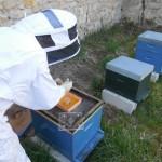 pour stimuler le réveil des abeilles, rien de tel qu'un peu de miel!!!